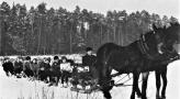Kulig Lesniczowka 1964r..jpg