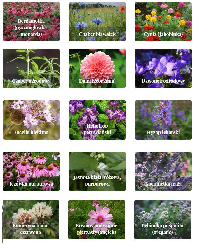 rośliny zielne i krzewinki 2