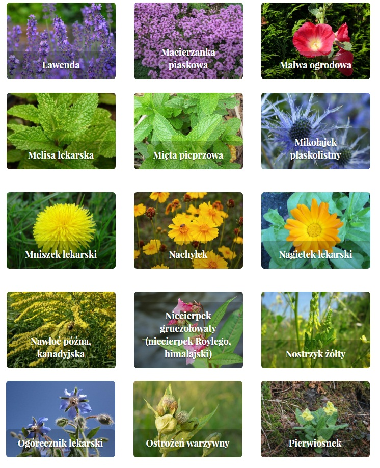 rośliny zielne i krzewinki 3