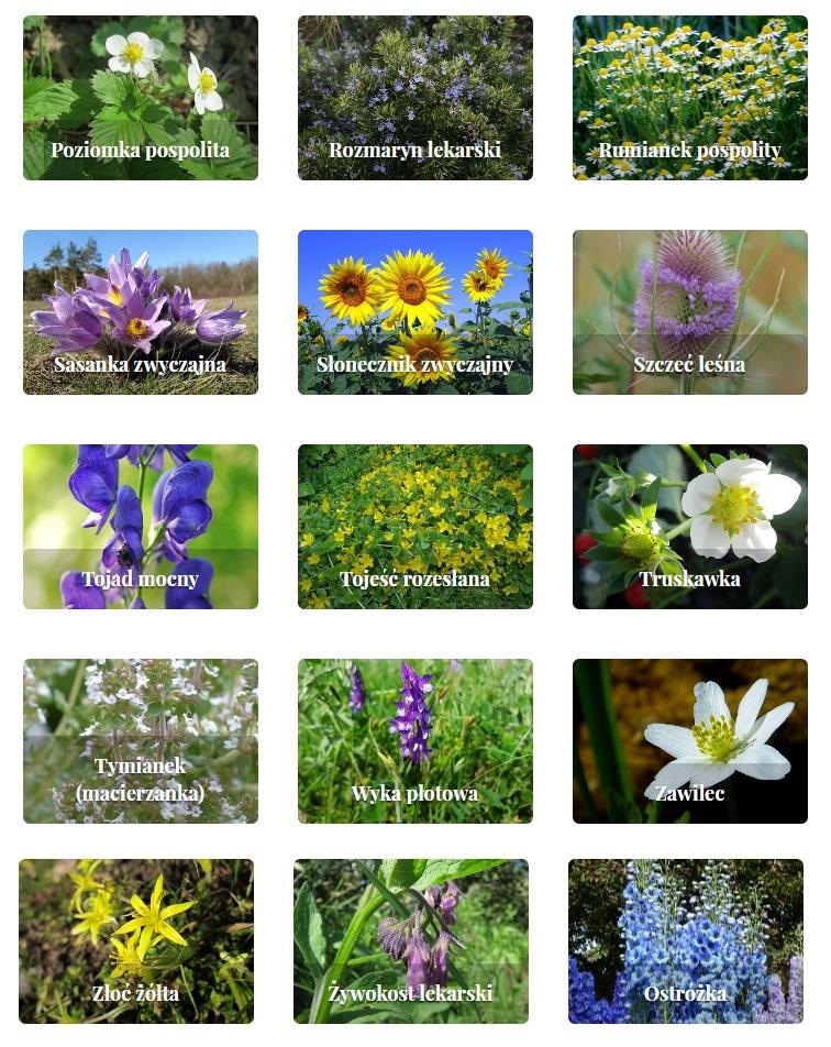 rośliny zielne i krzewinki 6