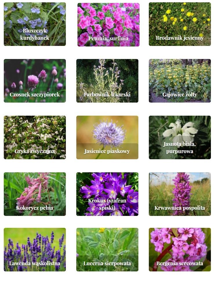 rośliny zielne i krzewinki